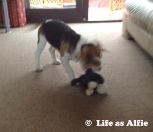 Shaking him around!